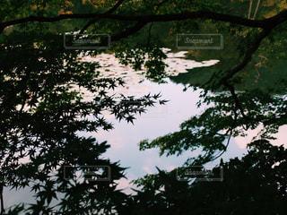 風景の写真・画像素材[148004]