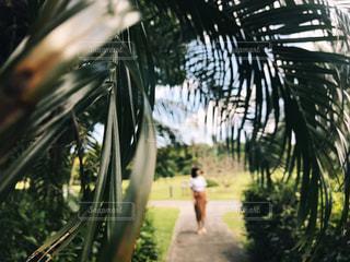 ヤシの木の奥に立っている女の子の写真・画像素材[1111488]