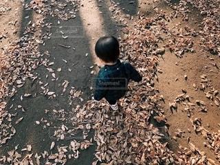 落ち葉の上を歩く男の子の写真・画像素材[2780621]