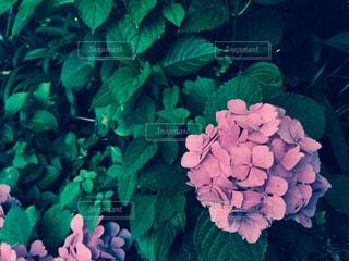 花の写真・画像素材[136817]