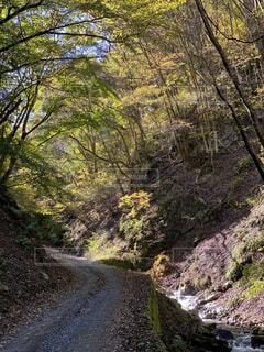 地元の林道の写真・画像素材[3815021]