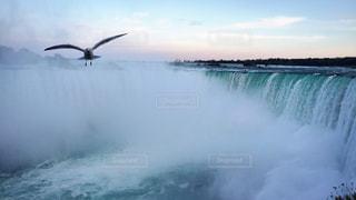 カナダ ナイアガラフォールズとカモメの写真・画像素材[3114918]