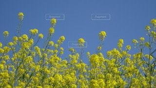 黄色い花の写真・画像素材[3085465]