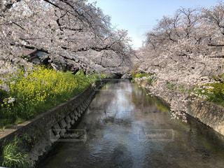 春の流れの写真・画像素材[3087365]