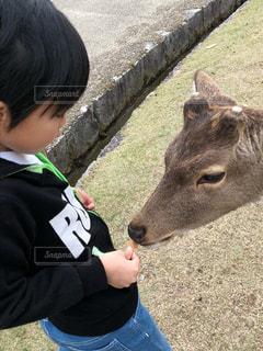 鹿と子供の写真・画像素材[3128112]