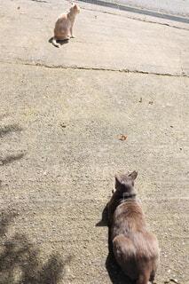 2匹のネコの写真・画像素材[4669026]