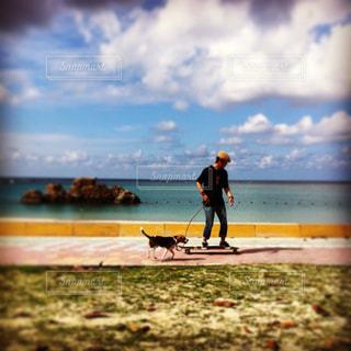 犬の写真・画像素材[137931]