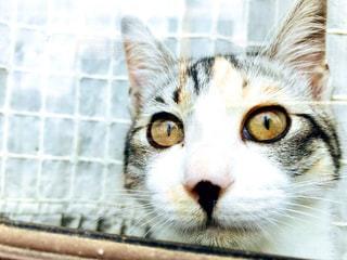 カメラを見ている猫のクローズアップの写真・画像素材[3137658]
