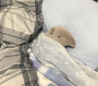 眠るスリスリの写真・画像素材[3137729]