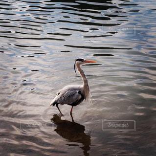 大きな鳥の写真・画像素材[3138774]