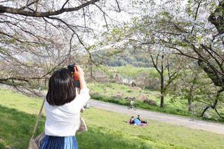 桜の撮影の写真・画像素材[3150962]