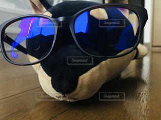 ブルーライトカットメガネをかけた犬の写真・画像素材[3251312]