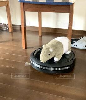掃除機ロボットにぬいぐるみをのせての写真・画像素材[4402429]