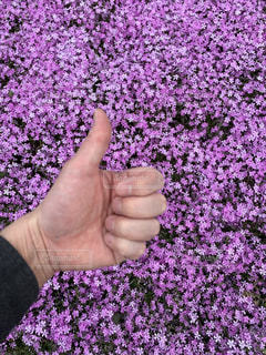春の絨毯いいねの写真・画像素材[3093732]