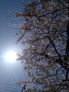 空の写真・画像素材[121874]