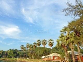 ヤシの木とコテージの写真・画像素材[3168737]