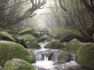 自然の写真・画像素材[124645]