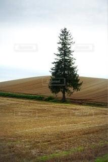 クリスマスツリーの木の写真・画像素材[3744613]