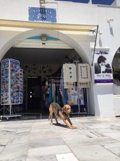 店番してる犬 伸び中の写真・画像素材[3097961]