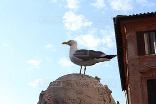 建物の前に立っている鳥の写真・画像素材[3097977]