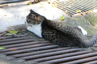 猫の写真・画像素材[215808]