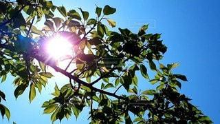 青空と木漏れ日の写真・画像素材[3098837]