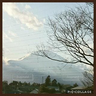 雪の中の木の写真・画像素材[3101186]