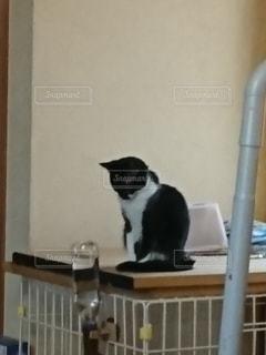なにかを狙っている子猫の写真・画像素材[3101465]