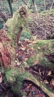 森の中のリスの食卓の写真・画像素材[3104274]