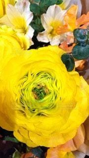 黄色い花の写真・画像素材[3109755]
