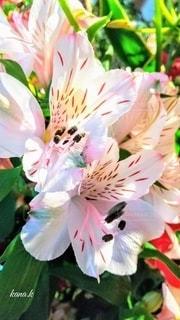 花のクローズアップの写真・画像素材[3110176]
