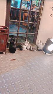 寒がり猫たちの写真・画像素材[3100173]