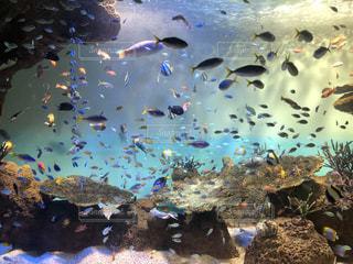 水槽の中を飛ぶ魚の群れの写真・画像素材[3104330]