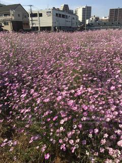 花の写真・画像素材[121607]