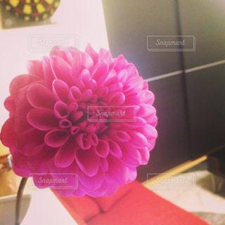 花の写真・画像素材[325049]
