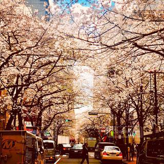 桜の木が並ぶにぎやかな都市通りの写真・画像素材[1171342]