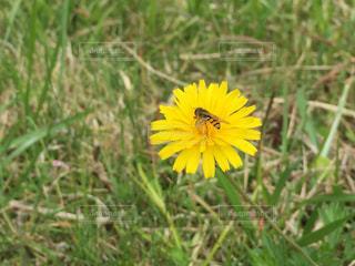 花とミツバチの写真・画像素材[3106721]