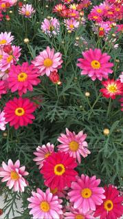 花のクローズアップの写真・画像素材[3105068]