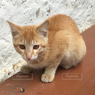 猫の写真・画像素材[216195]