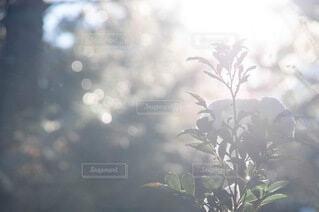 木に花の花瓶の写真・画像素材[4041865]