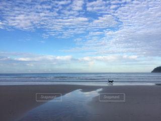 犬の写真・画像素材[121892]