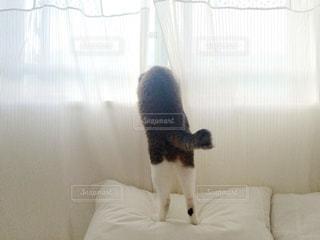 猫の写真・画像素材[121905]