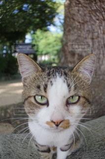 魚眼ごしの猫の写真・画像素材[3113036]