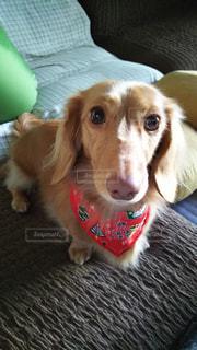 犬の写真・画像素材[164644]