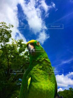 モデル,自然,風景,空,公園,春,フェス,雲,撮影,インコ,代々木公園,お洒落,model,ボウシインコ,Amazonparrot