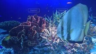 サンゴの水中眺めの写真・画像素材[3110278]
