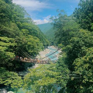 森の祖谷のかずら橋の写真・画像素材[3108795]