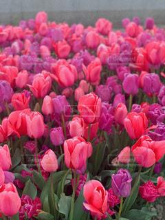 春の訪れの写真・画像素材[3108801]