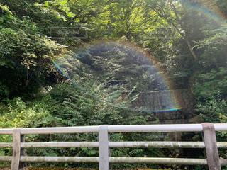 虹の眼の写真・画像素材[3109352]