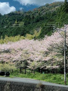 空と山と桜の三色コラボの写真・画像素材[3110092]